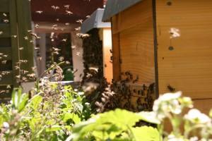 Hochbetrieb am Bienenstock. Honig aus´m Pott. Honig aus dem Ruhrgebiet